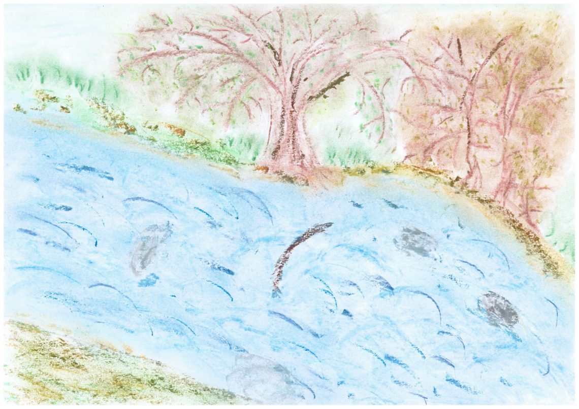 Bild 19 - Donaubild 11